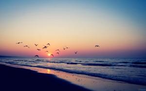 birds_flying 1
